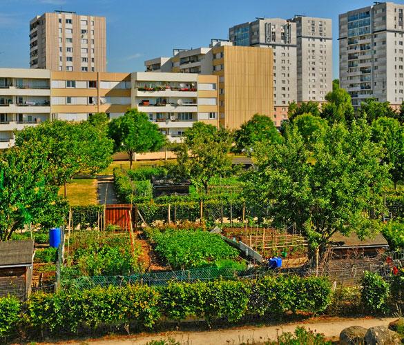 Cultiver en ville